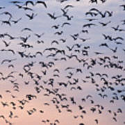 Birds A Flock Of Seagulls Art Print