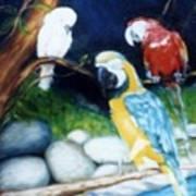 Birds At Rest Art Print