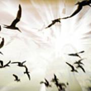 Birds Explosion Art Print