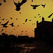 Birds In Flight At Gateway Of India Art Print
