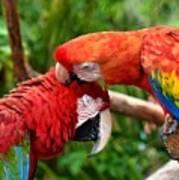 Birds In Love Art Print