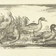 Birds In The Reeds, Adriaen Collaert, 1659 Art Print