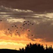 Birds In The Sky Art Print