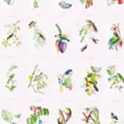 Birds Of Brazil Art Print