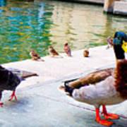 Birds Of The River Art Print