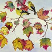 Birds On Maple Tree 10 Art Print