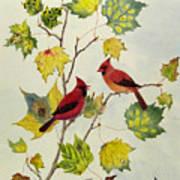 Birds On Maple Tree 2 Art Print