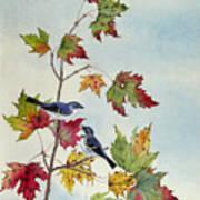 Birds On Maple Tree 7 Art Print
