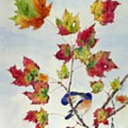 Birds On Maple Tree 8 Art Print