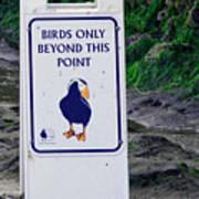 Birds Only Art Print