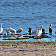 Birds Panorama Art Print