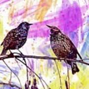 Birds Stare Nature Songbird  Art Print