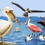 Birds With Strange Beaks Art Print