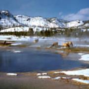 Biscuit Basin Elk Herd Art Print