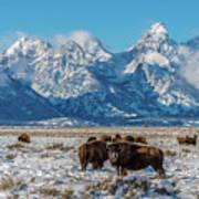 Bison At The Tetons Art Print