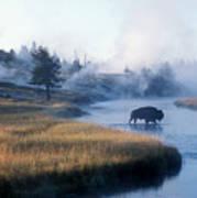 Bison Crosses The Firehole River Art Print