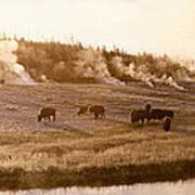 Bison Firehole River Yellowstone Art Print