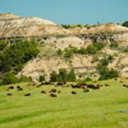 Bison Herd Art Print