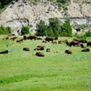 Bison Herd II Art Print