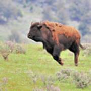 Bison In Flight Art Print
