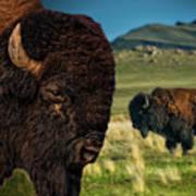 Bison On The Plain Art Print by Paul W Sharpe Aka Wizard of Wonders