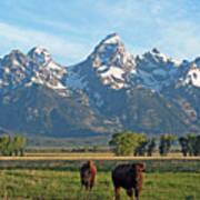 Bison Range Art Print