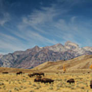 Bison The National Mammal Art Print