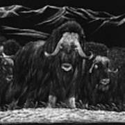 Bisons Art Print