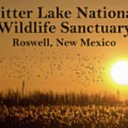 Bitter Lake National Wildlife Refuge Birds, Roswell, New Mexico Art Print