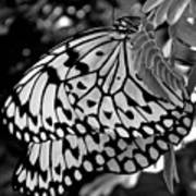 Black And White Butterfly Art Print