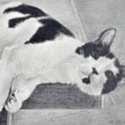 Black And White Cat Lounging Art Print