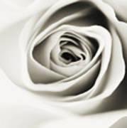 Black And White Delight Art Print