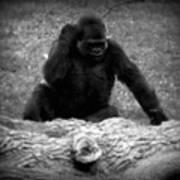 Black And White Gorilla Art Print