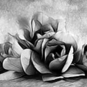 Black And White Is Beautiful Art Print