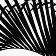 Black And White Palm Branch Art Print