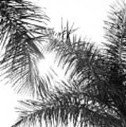 Black And White Palm Trees Art Print