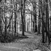 Black And White Path In Autumn  Art Print