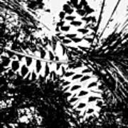 Black And White Pine Cone Art Print
