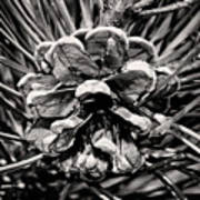 Black And White Pine Cone Wall Art Art Print