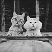Black And White Portrait Of Two Aadorable And Curious Cats Looking Down Through The Window Art Print