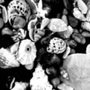 Black And White Seashells Art Print