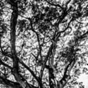 Black And White Tree 2 Art Print