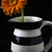 Black And White Vase With Daisy Art Print
