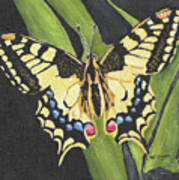 Black And Yellow Butterfly Art Print