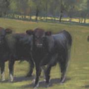 Black Angus Buddies Art Print