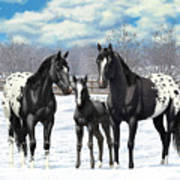 Black Appaloosa Horses In Winter Pasture Art Print