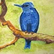 Black As Blue Bird Art Print
