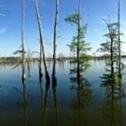 Black Bayou Lake 2 Art Print