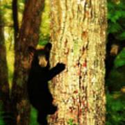 Black Bear Cubs Art Print
