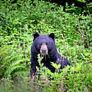 Black Bear Eating His Veggies Art Print